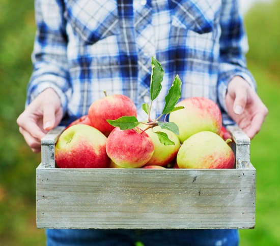 Agritourism – sustainable development trend in the future